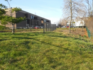 Campus Green Space: Just in Time