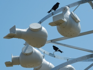 GLC's Field Station Creates Habitats for Local, Migrating Birds