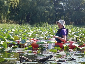 WNY PRISM Provides Education, Outreach, and Invasive Species Management